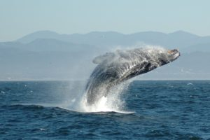 捕鯨問題をわかりやすく賛成反対?