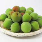 梅の実には毒がある?毒抜きの方法や食べないための見極め方は?