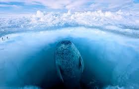 海が恐怖症
