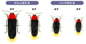 蛍に似た虫