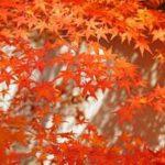 9月といえばの行事やイベント、記念日や花などネタの種を紹介!
