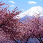 春といえばの行事やイベント、記念日や花などネタの種を紹介!