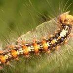 毛虫を寄せ付けない方法や対策は?虫除けのグッズのおすすめは?