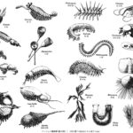 昆虫の進化は謎だらけ!過程の化石がないのでわからない?