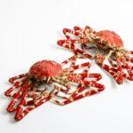 タカアシガニの味はまずい!?おいしい蟹の選び方やコツは?