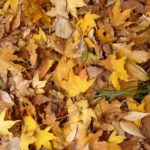 落ち葉を掃除する簡単な方法や楽にできるおすすめの道具は?