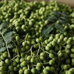 山椒のしびれる理由や対処法は?食べ過ぎの量や効果、効能は?