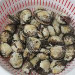 サルボウ貝の砂抜きの方法や持ち帰り方は?保存方法やおすすめの食べ方は?